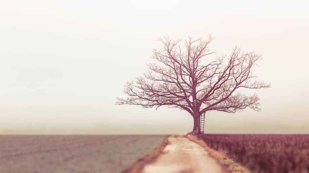 Drzewo z drabiną