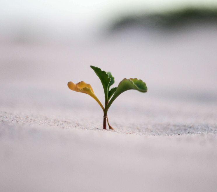 Kwitnąca roślina