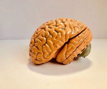 Ludzki mózg