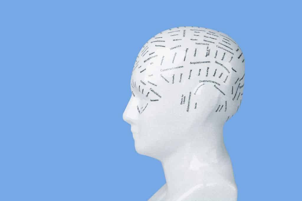 Schemat głowy