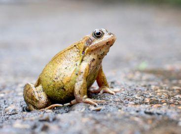 Żaba siedząca na ulicy